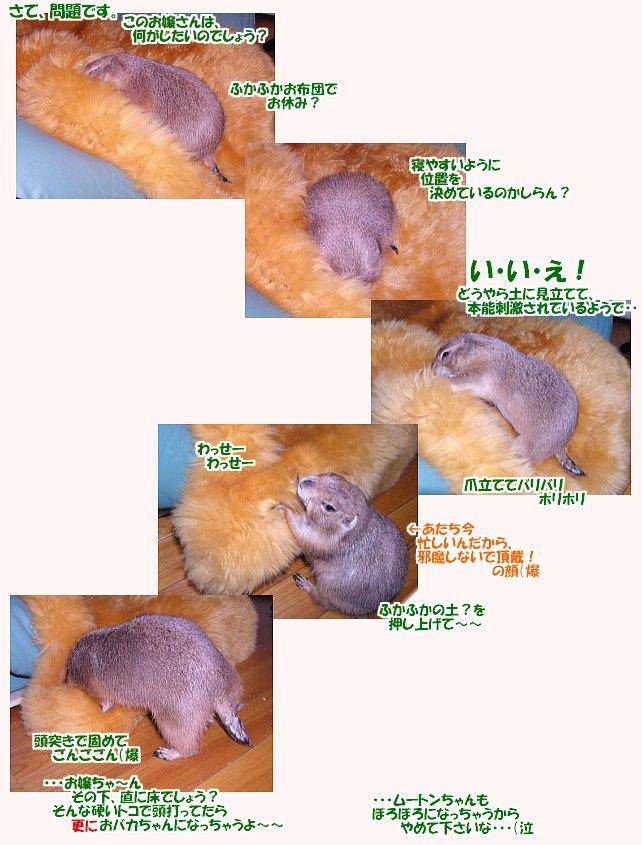03187498[1].jpg